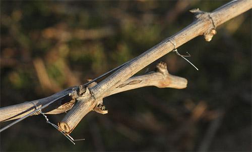 reglaje del apriete alambre Infaco sobitec peru