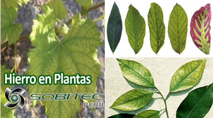 Hierro en las plantas