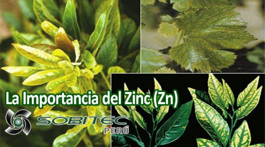 La importancia de los micro elementos en la producción de frutales y vides de alta calidad y condición