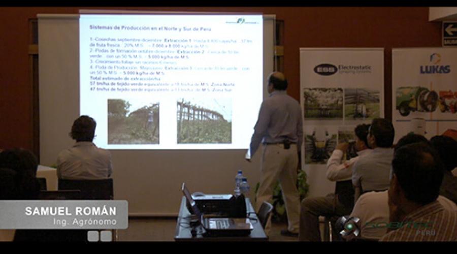 Reflexión: producción de uva de mesa de calidad en el norte y sur del Perú