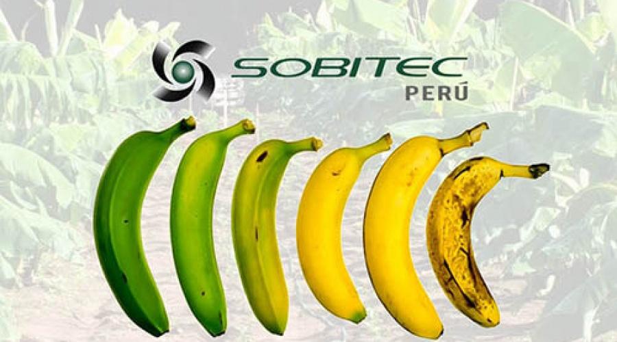 Frutas Climatéricas y no climatéricas