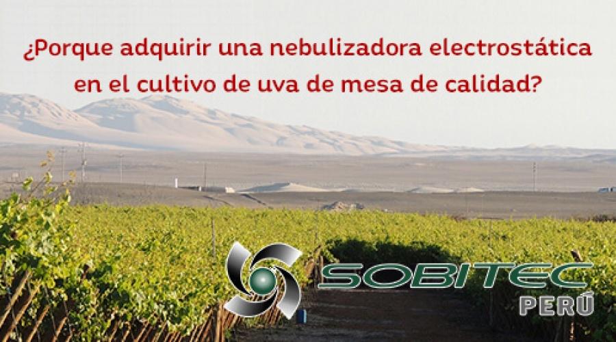 Porque adquirir una nebulizadora electrostática en el cultivo de uva de mesa de calidad